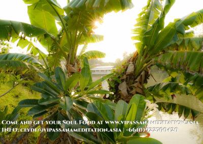 meditation-in-chiang-mai-10-2
