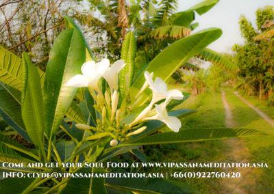 meditation-in-chiang-mai-7-2