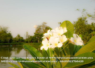 meditation-in-chiang-mai-8-2