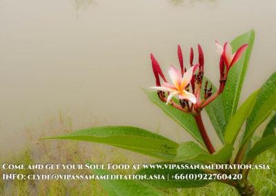 meditation-in-chiang-mai-91-2